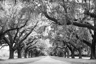 Avenue Of Oaks Charleston South Carolina Print by Stephanie McDowell