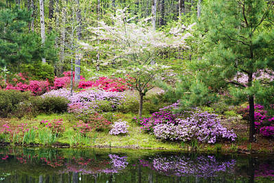 Dogwood Photograph - Azalea Heaven by Eggers   Photography