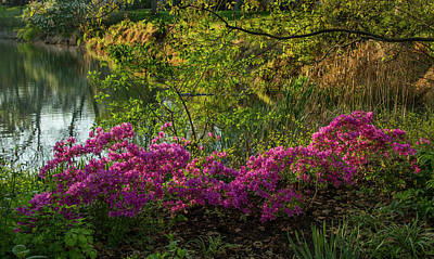 St Louis Photograph - Azaleas At Murphy Lake In Forest Park by Garry McMichael