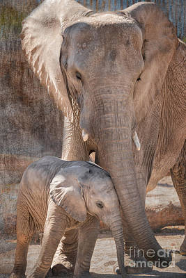 Baby African Elephant Wanting Affection Print by Al Andersen