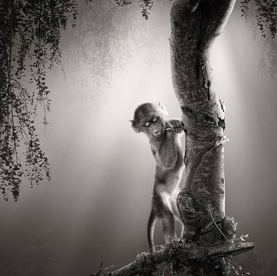 Backlit Photograph - Baby Baboon by Johan Swanepoel