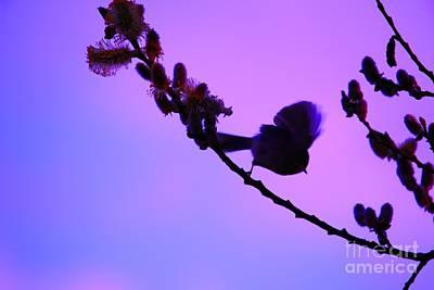 Photograph - Baby Bird Silhouette by Nick Gustafson