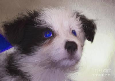 Pup Digital Art - Baby Blue Eyes by Avalon Fine Art Photography