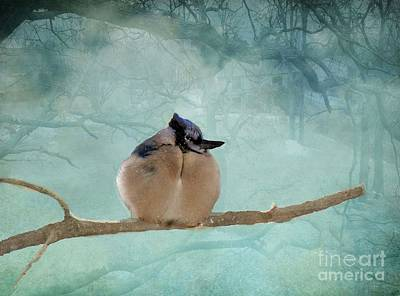Baby Bluejay Photograph - Baby Bluejay In Fog  by Janette Boyd