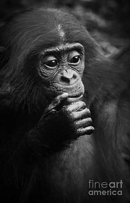 Photograph - Baby Bonobo by Helga Koehrer-Wagner
