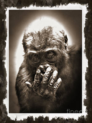 Gorilla Drawing - Baby Gorilla Studying His Hand Digitally Altered II by Jim Fitzpatrick