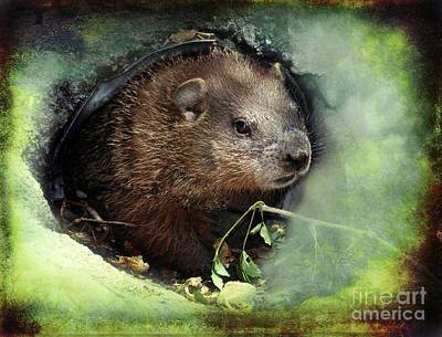 Groundhog Mixed Media - Baby Groundhog by Elaine Manley