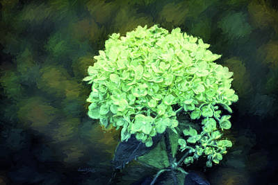 Baby Lime Hydrangea  Print by Sandi OReilly