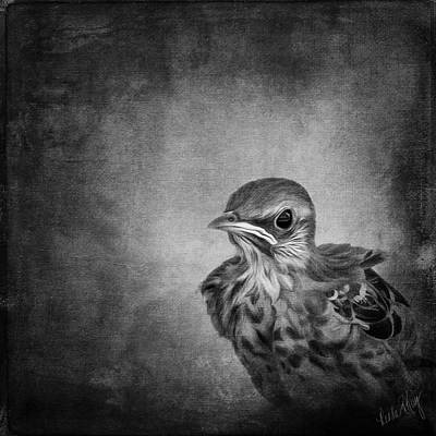 Mockingbird Digital Art - Baby Mockingbird 6776 by Linda King