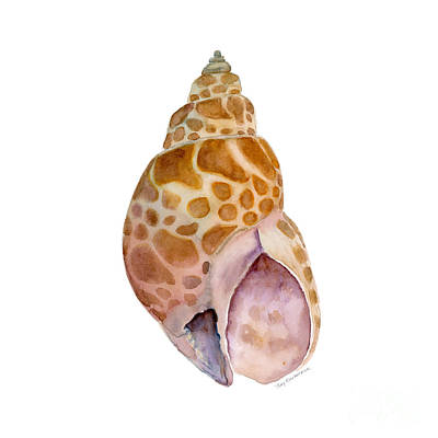 Babylon Painting - Babylon Japonica Shell by Amy Kirkpatrick