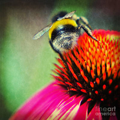 Abstracted Coneflowers Photograph - Back Side - Bumble Bee by Angela Doelling AD DESIGN Photo and PhotoArt