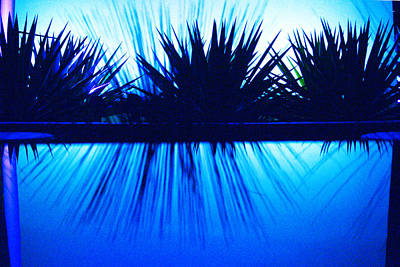 Blue Photograph - Backlit By Blue by Richard Henne