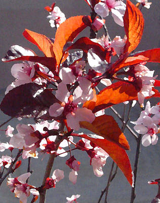 Floral Painting - Backlit Pink Tree Blossoms by Amy Vangsgard