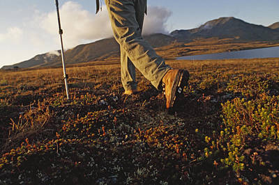 Backpacker Hikes Across Tundra In Logan Print by Gordon Wiltsie