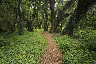 Sky Photograph - Backwoods Path by Jon Glaser