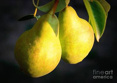 Backyard Garden Series - Two Pears Print by Carol Groenen