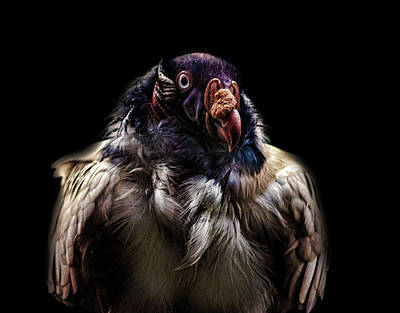 Griffon Photograph - Bad Birdy by Martin Newman