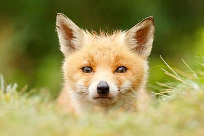 Bad Fur Day - Fox Cub Print by Roeselien Raimond