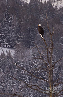 Bald Eagle And Magpie-signed-#6175 Original by J L Woody Wooden