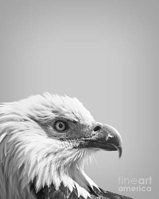 Bald Eagle Print by Delphimages Photo Creations
