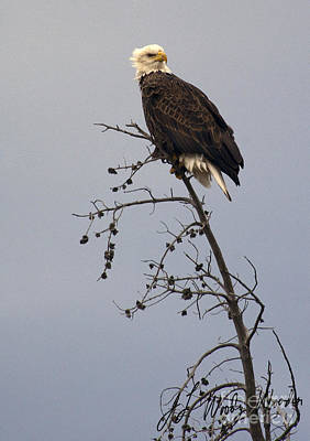 Bald Eagle In Tree Top-signed Original by J L Woody Wooden