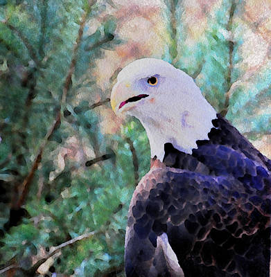 Bald Eagle Painting Print by Maggie Vlazny
