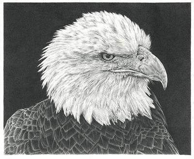 Bald Eagle Original by Remrov
