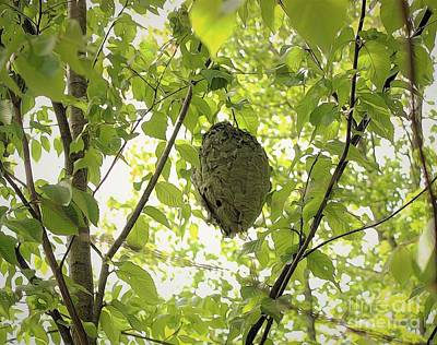 Bald-faced Hornets Nest Print by Patti Whitten