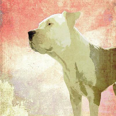Pitbull Digital Art - Bali The Dog C by Filippo B