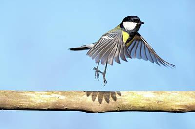 On The Move Photograph - Ballerina Bird by Marcel ter Bekke