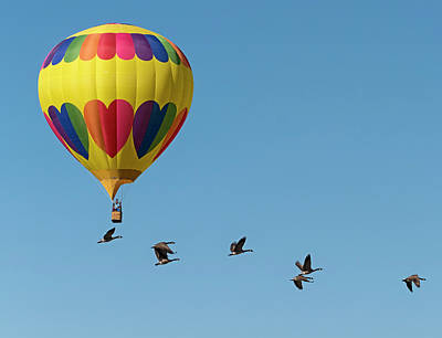 Balloon And Canada Geese Print by Loree Johnson