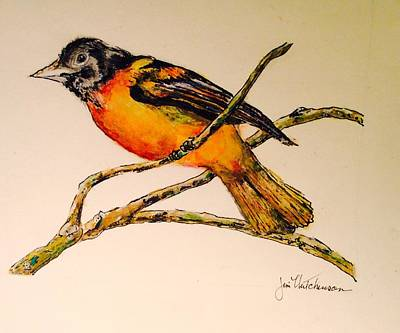 Oriole Drawing - Baltimore Oriole by Jim Hutchinson