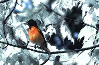 Baltimore Orioles Dream Print by Nancy TeWinkel Lauren