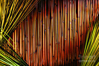 Bamboo And Grass Print by Olivier Le Queinec