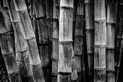 Bamboo Detail Print by Kelley King