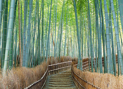 Bamboo Forest Photograph - Bamboo Forest, Kyoto City, Kyoto by Panoramic Images