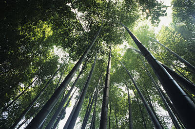 Photograph - Bamboo Forest by Mitch Warner - Printscapes