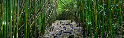 Bamboo Mana Print by Sean Davey