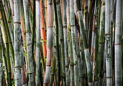 Bamboo Seduction Print by Karen Wiles