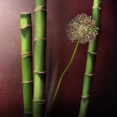 Flower Photograph - Bamboos With Garlic Flower by Cesar Palomino