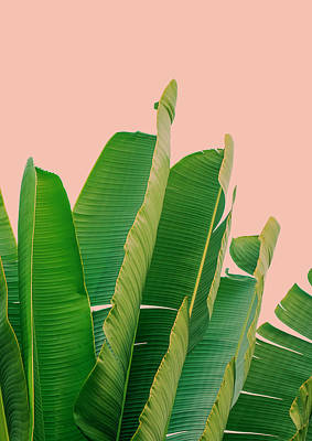 Banana Leaves Print by Rafael Farias