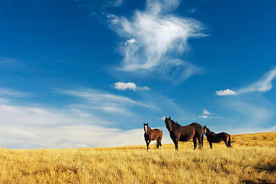 Old West Photograph - Band Of Horses by Todd Klassy