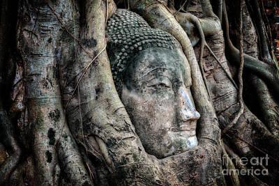 Tree Roots Digital Art - Banyan Tree Buddha by Adrian Evans
