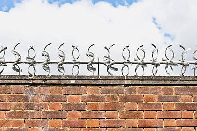 Black Metal Fence Photograph - Barbed Wire by Tom Gowanlock