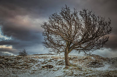 Bare Tree Against A Winter Sunset Print by Chris Fletcher