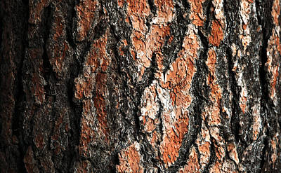 Bark Print by Todd Klassy