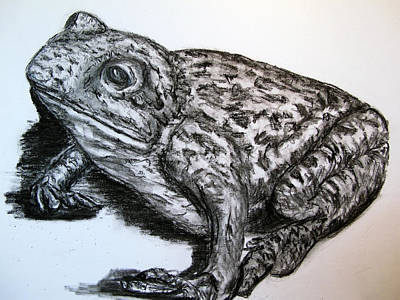 Hong Kong Drawing - Barking Frog From Guangzhou by Joy Neasley