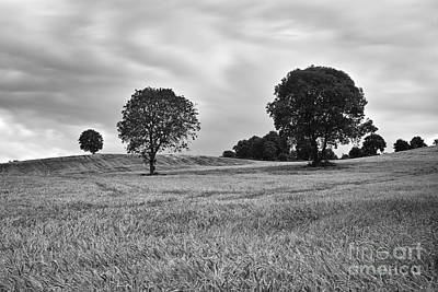 Landscape Photograph - Barley Field by William Cleary