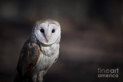 Barn Owl Print by Andrea Silies