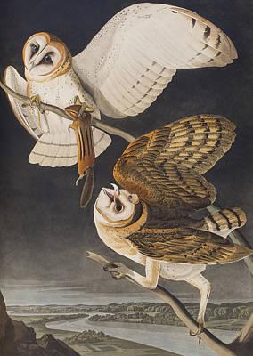 Owl Drawing - Barn Owl by John James Audubon